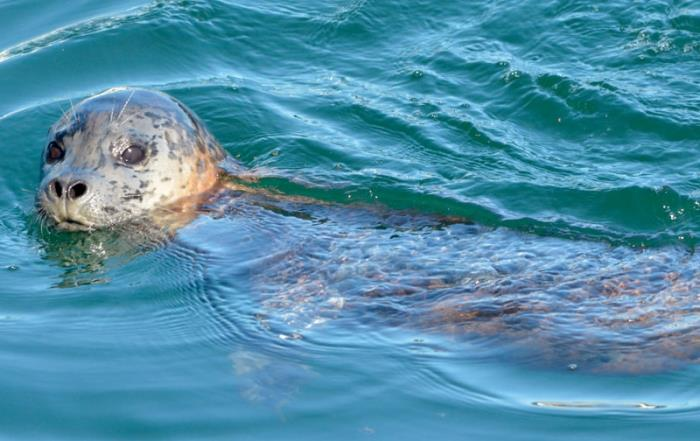 331 Things to Do - #35 Rise & Shine with Seals on a Sunrise Kayak Tour