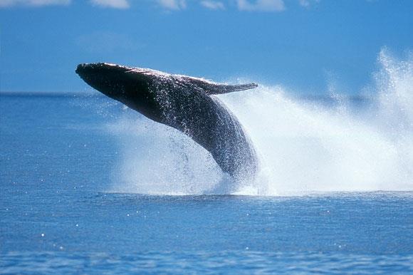 Wildlife and Sealife in Port Angeles