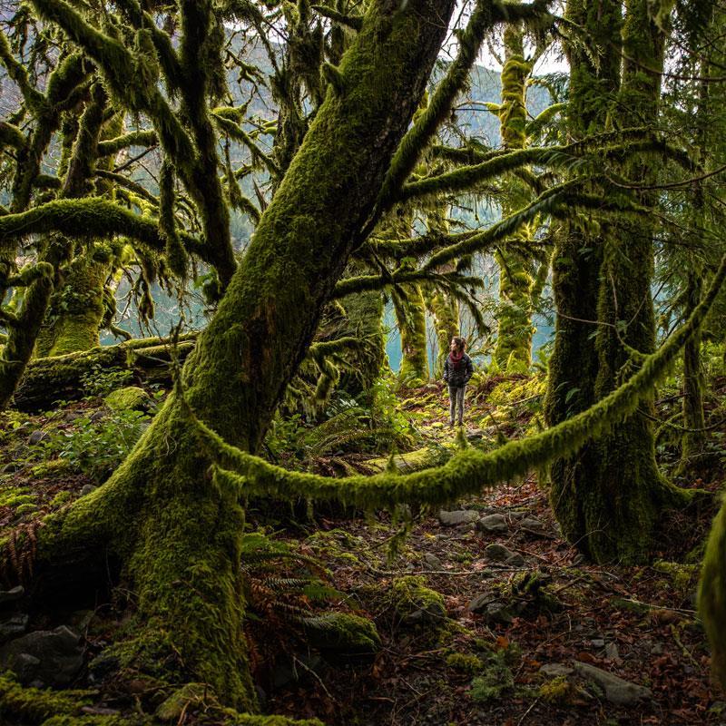 Hoh Rain Forest - Visit Port Angeles Washigton