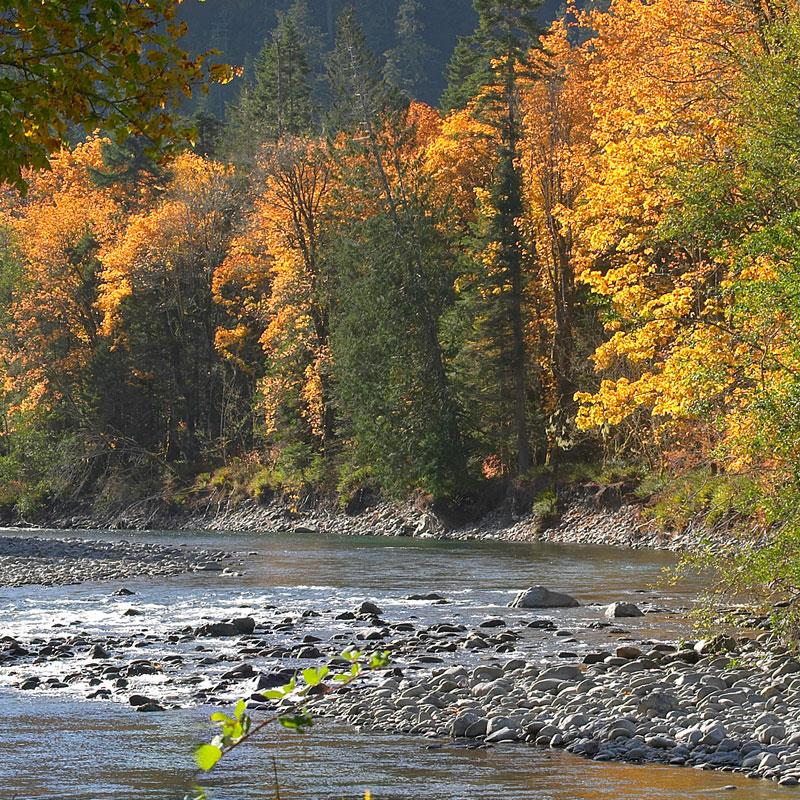 Elwha River Valley - Fall Leaves Changing