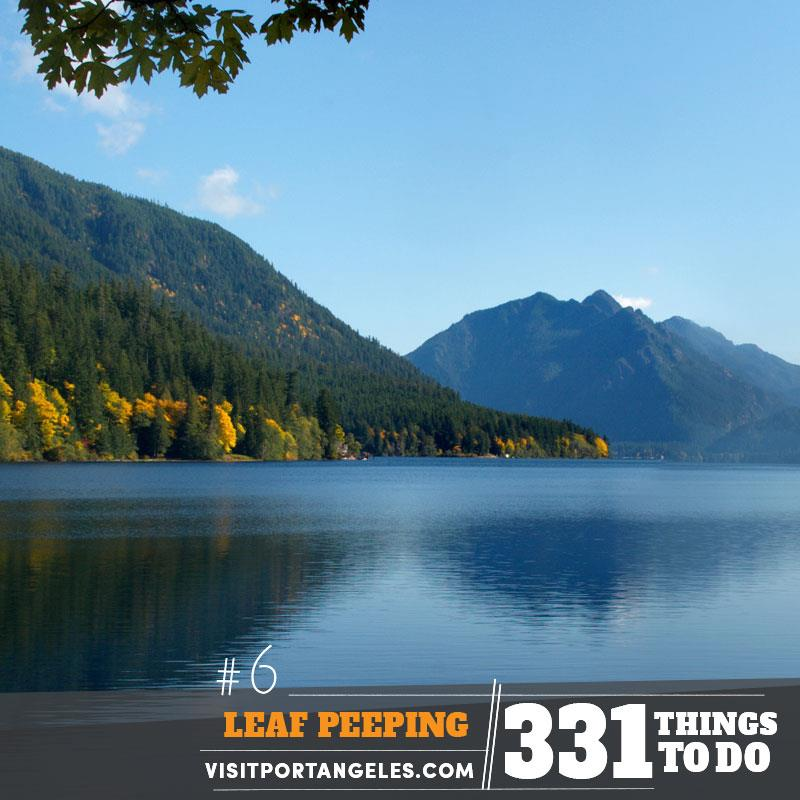 Top Spots for Viewing Fall Foilage in the Olympic National Park