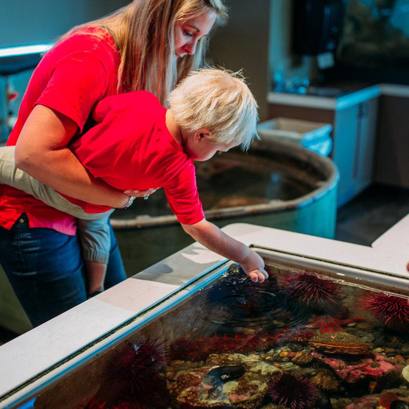 Feiro Marine Life Center in Port Angeles, WA
