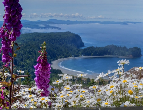 Olympic National Park Hiking: Wander to Wildflowers