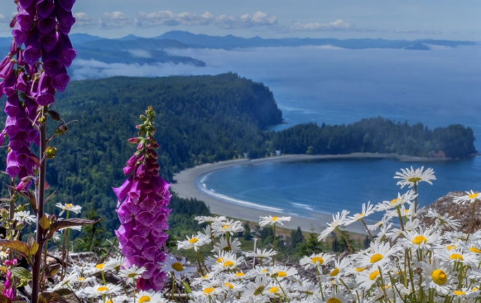 Olympic National Park - Hiking Trails to See Wildflowers